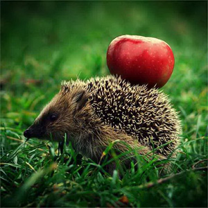 healthy-lifstyle-hedgehog